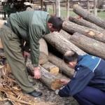 Lemn de peste 100.000 de lei confiscat de la un gater din Pojorâta