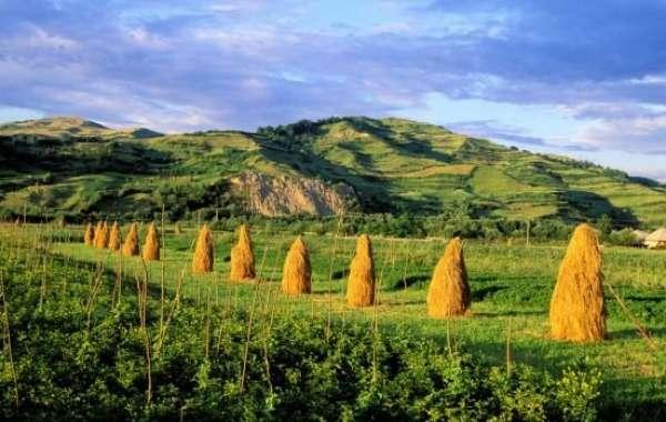 Exodul românilor