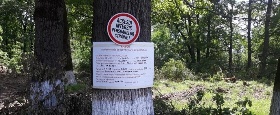 Opriți distrugerea Pădurii Drăgoieni | CampaniaMea pe DECLIC
