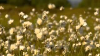Orizont 77 : Romanta ploii